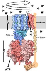 ATPS model