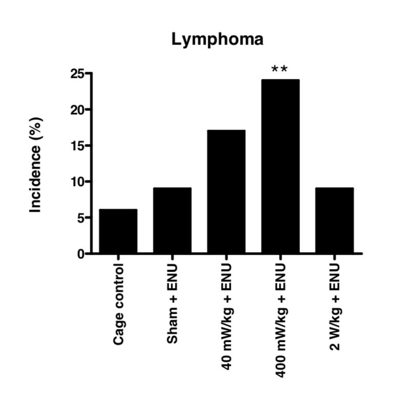 Lerchl Lymhoma