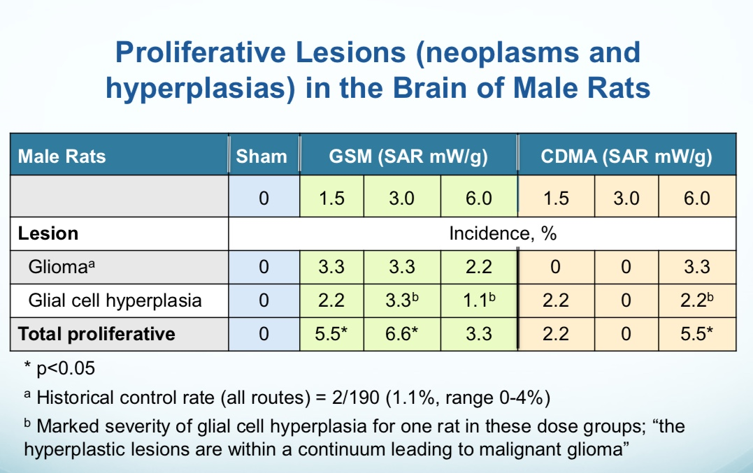 Melnick: glioma and hyperplasia GSM rats